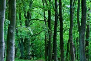 Investissement forestier : Foncière Forestière et GFF Vatel misent sur la forêt bretonne