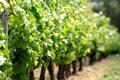 Investir dans le vin : Diversifier ses placements en prenant de la bouteille !