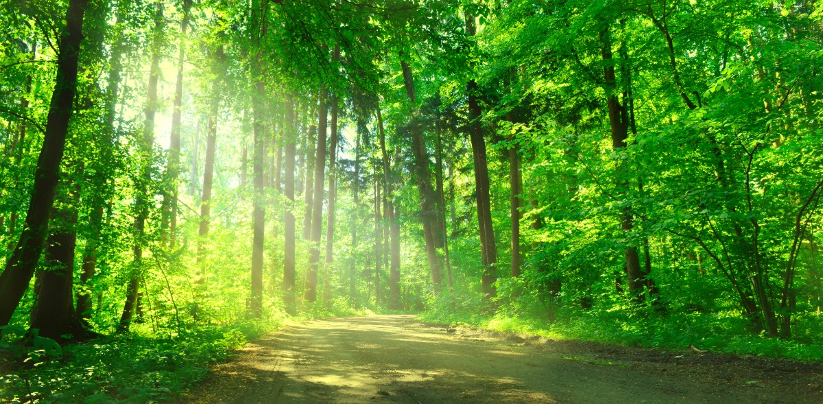 Forêts / Actifs tangibles : Foncière Forestière et GFF Vatel achètent 129 ha de la forêt du Cros de Monvert