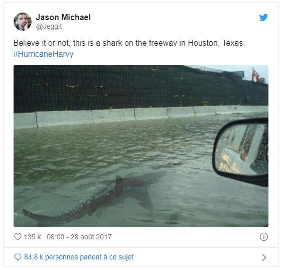 Fake news - photo truquée d'un requin nageant dans la rue après un ouragan, Houston, Texas , USA
