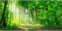 Placement forêt