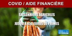 Aide financière pour les saisonniers agricoles : jusqu'à 450 euros de primes versées à compter du 1er juillet