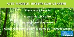 Épargne verte : épargner régulièrement en achetant un arbre, tous les mois ?