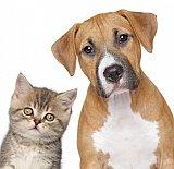 Assurance frais vétérinaires