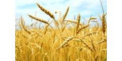 Placement : investir dans des terres agricoles pour récolter plus d'épargne