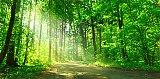 Investir dans les forêts, c'est un bon plan, apprendre à les connaître en se baladant, c'est encore plus enrichissant !