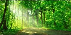 Filière bois/forêt : prochainement une aide financière comme en Allemagne ?