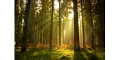 Le prix des forêts a flambé en 2011 !