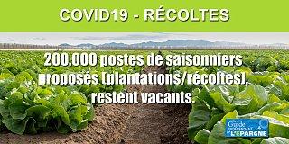 COVID19 : Manque de bras dans les champs = manque de fruits et légumes dans vos assiettes